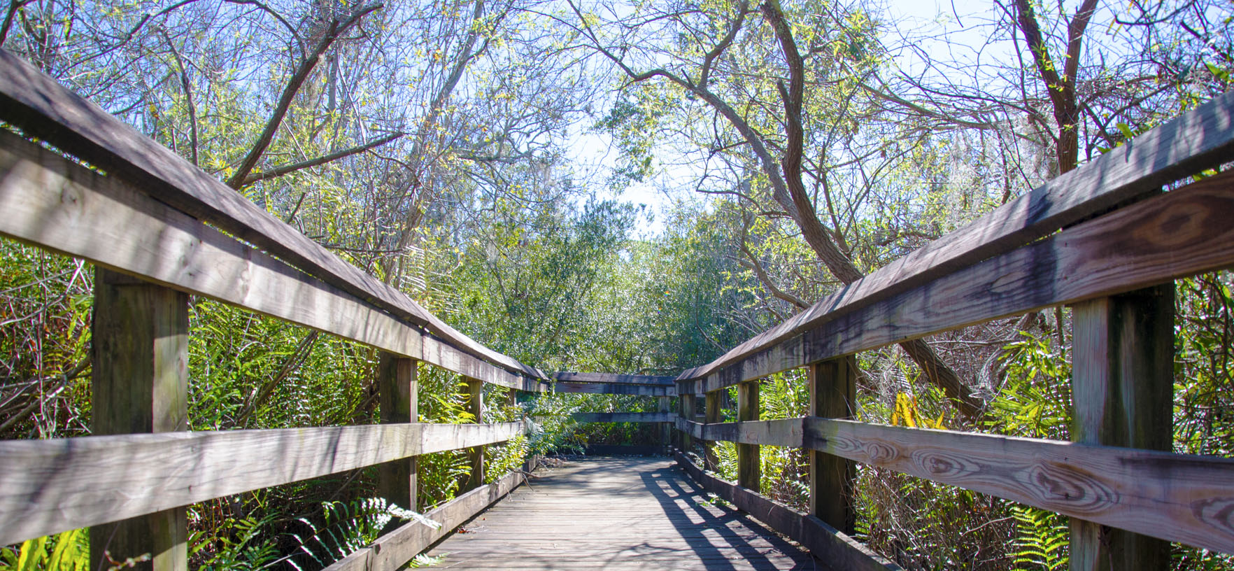 Boyd Hill Nature Preserve trail